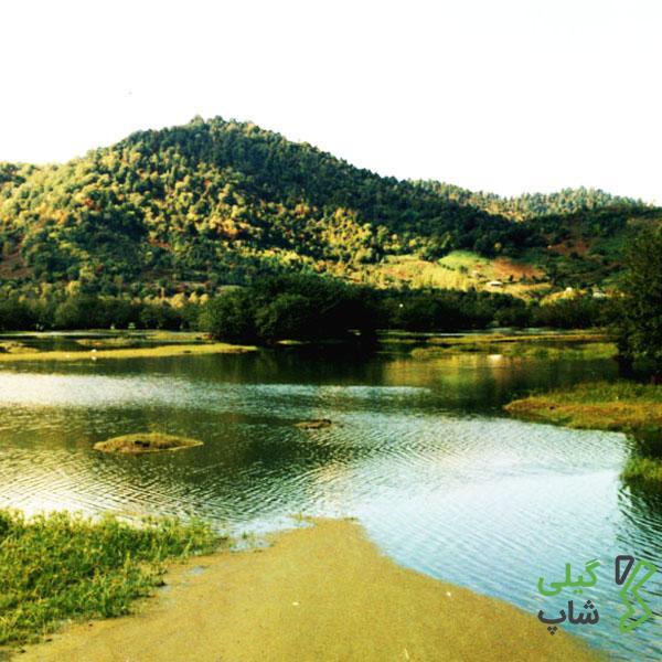 پارک جنگلی بی بی یانلو | زیباترین پارک استان گیلان