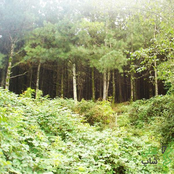 پارک بسیار زیبا و جنگلی بی بی یانلو در استان گیلان