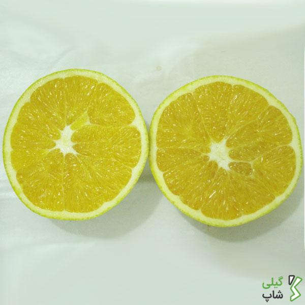 قیمت روز پرتقال تامسون شمال