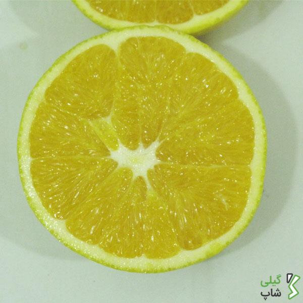 پرتقال تامسون استان گیلان