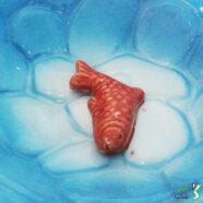 ماهی قرمز در حوض سفالی