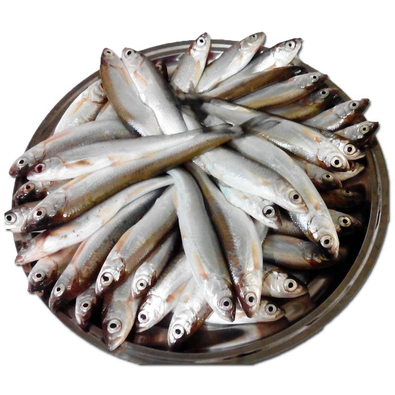 خرید ماهی اسلک شمال
