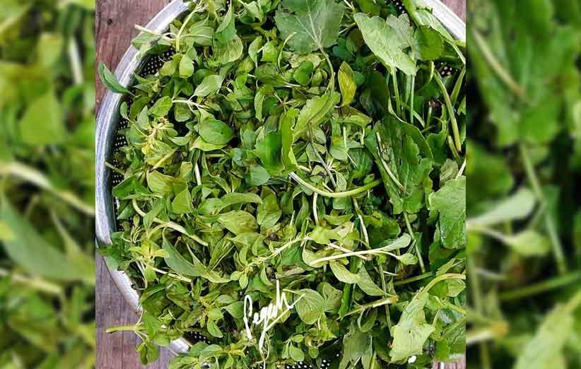 نام سبزی های محلی گیلان و یا نام سبزی های معطر شمالی