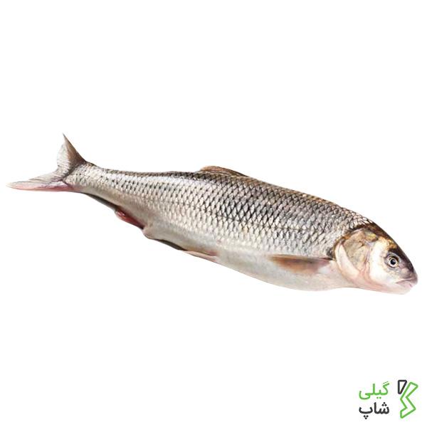 ماهی سفید دریای خزر