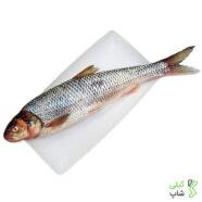 خرید ماهی سفید دریای خزر