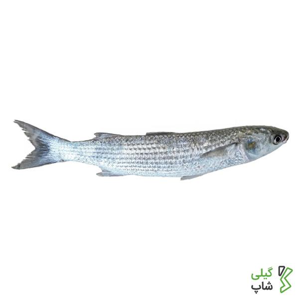 ماهی کفال تازه شمال (دریای خزر)